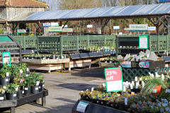 Κεντρικά φυτά κήπων για την πώληση. Στοκ εικόνες με δικαίωμα ελεύθερης χρήσης
