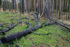 κεντρική δασική περιοχή της Ρωσίας Ryazan πυρκαγιάς Στοκ Εικόνα