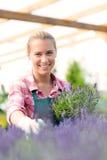 Κεντρική γυναίκα κήπων με lavender το χαμόγελο λουλουδιών Στοκ Φωτογραφίες