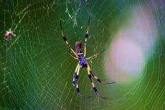 κεντρική ζωηρόχρωμη αράχνη τ& Στοκ φωτογραφία με δικαίωμα ελεύθερης χρήσης