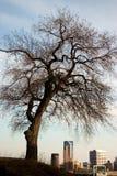 κεντρικός πλαισιωμένος Στοκ φωτογραφία με δικαίωμα ελεύθερης χρήσης
