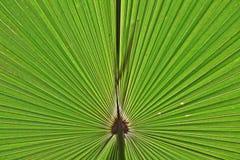 Κεντρικός του φύλλου στοκ φωτογραφία