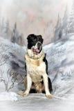 Κεντρικό ασιατικό σκυλί ποιμένων Στοκ φωτογραφία με δικαίωμα ελεύθερης χρήσης
