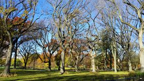 κεντρικό νέο πάρκο Υόρκη Στοκ φωτογραφία με δικαίωμα ελεύθερης χρήσης