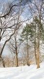 κεντρικό νέο πάρκο Υόρκη Στοκ φωτογραφίες με δικαίωμα ελεύθερης χρήσης