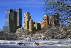 κεντρικό νέο χιόνι Υόρκη πάρκ&o Στοκ φωτογραφία με δικαίωμα ελεύθερης χρήσης