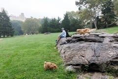 Κεντρικό πάρκο σε NYC Στοκ εικόνες με δικαίωμα ελεύθερης χρήσης