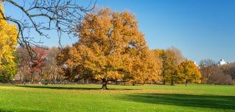 Κεντρικό πάρκο στην ηλιόλουστη ημέρα φθινοπώρου Στοκ Εικόνες