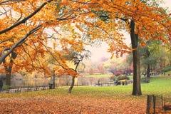 κεντρικό πάρκο Στοκ Φωτογραφία