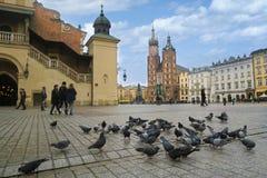 Κεντρικό τετράγωνο της Κρακοβίας με τα περιστέρια Στοκ Φωτογραφίες