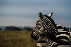 Κενυατικό σαφάρι στο εθνικό πάρκο το 2011 Στοκ εικόνα με δικαίωμα ελεύθερης χρήσης