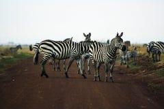 Κενυατικό σαφάρι στο εθνικό πάρκο το 2011 Στοκ φωτογραφία με δικαίωμα ελεύθερης χρήσης