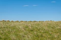 Κενός μακροχρόνιος τομέας χλόης με το μπλε ουρανό στο υπόβαθρο Στοκ Εικόνες