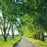 κενός μακρύς δρόμος αγροτικός Στοκ εικόνα με δικαίωμα ελεύθερης χρήσης