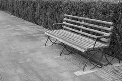 Κενός ξύλινος πάγκος στο πάρκο στη γραπτή εικόνα Στοκ Φωτογραφία