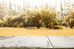 Κενός ξύλινος πίνακας για το παρόν προϊόν δασική εποχή μονοπατιών πτώσης φθινοπώρου Στοκ φωτογραφίες με δικαίωμα ελεύθερης χρήσης