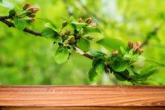 Κενός ξύλινος πίνακας με το υπόβαθρο άνοιξη του ανθίζοντας άγριου δέντρου μηλιάς Μπορέστε να χρησιμοποιηθείτε για το προϊόν επίδε στοκ εικόνες