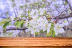 Κενός ξύλινος πίνακας με το υπόβαθρο άνοιξη του ανθίζοντας δέντρου κερασιών Μπορέστε να χρησιμοποιηθείτε για το προϊόν επίδειξης  στοκ φωτογραφία