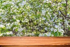 Κενός ξύλινος πίνακας με το υπόβαθρο άνοιξη του ανθίζοντας δέντρου κερασιών Μπορέστε να χρησιμοποιηθείτε για το προϊόν επίδειξης  στοκ εικόνες