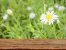 Κενός ξύλινος πίνακας με το υπόβαθρο άνοιξη φύσης λουλουδιών στοκ εικόνες