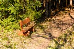 Κενός ξύλινος πάγκος στο δασικό μονοπάτι Στοκ Εικόνα