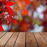 Κενός ξύλινος πίνακας γεφυρών και κόκκινος κισσός. Στοκ Εικόνες
