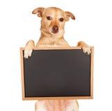 Κενός πίνακας κιμωλίας εκμετάλλευσης διασταύρωσης Chihuahua Στοκ εικόνες με δικαίωμα ελεύθερης χρήσης
