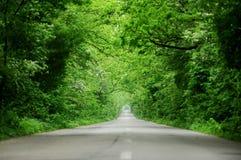Κενός δρόμος μέσω του δάσους Στοκ εικόνα με δικαίωμα ελεύθερης χρήσης