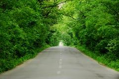 Κενός δρόμος μέσω του δάσους Στοκ Εικόνες