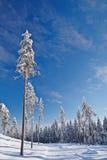 Κενός χιονισμένος δρόμος στο χειμερινό τοπίο Στοκ Εικόνες