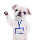 Κενό άσπρο πρότυπο διακριτικών ένδυσης σκυλιών Στοκ Φωτογραφία