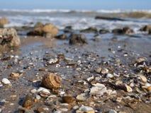 Κενό κοχύλι rapana στην κυματωγή θάλασσας στοκ φωτογραφία με δικαίωμα ελεύθερης χρήσης