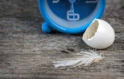 Κενό κοχύλι αυγών πουλιών Στοκ εικόνα με δικαίωμα ελεύθερης χρήσης