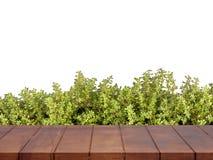Κενό ξύλινο πάτωμα η ανασκόπηση αφήνει άσπρος Στοκ Φωτογραφία