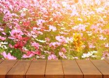 Κενό ξύλινο πάτωμα Υπόβαθρο λουλουδιών κόσμου Στοκ Εικόνες