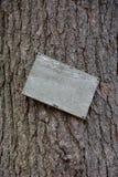 Κενό ξύλινο σημάδι στο δέντρο πεύκων Στοκ Φωτογραφία