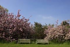 κενό πάρκο δύο πάγκων στοκ φωτογραφίες με δικαίωμα ελεύθερης χρήσης