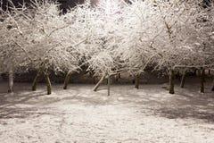 Κενό πάρκο πόλεων στη χειμερινή νύχτα Στοκ Εικόνες