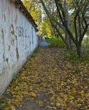 Κενό πεζοδρόμιο με τα πεσμένα φύλλα στο φθινόπωρο στοκ φωτογραφία