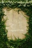 Κενό πράσινο πλαίσιο τοίχων χλόης ως υπόβαθρο Στοκ Εικόνες