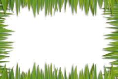 κενό πρότυπο χλόης Στοκ εικόνα με δικαίωμα ελεύθερης χρήσης