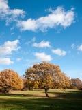 Κενό σαφές μπλε ουρανού εδάφους χλόης τοπίων δέντρων φθινοπώρου Στοκ φωτογραφίες με δικαίωμα ελεύθερης χρήσης