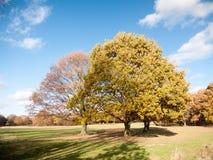 Κενό σαφές μπλε ουρανού εδάφους χλόης τοπίων δέντρων φθινοπώρου Στοκ φωτογραφία με δικαίωμα ελεύθερης χρήσης