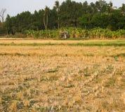 Κενό Cornfield καλλιεργήσιμου εδάφους Στοκ Εικόνα