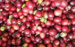 Κεράσια καφέ στην εκλεκτική εστίαση φυτειών καφέδων Στοκ εικόνα με δικαίωμα ελεύθερης χρήσης