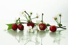 Κεράσια σε ένα άσπρο υπόβαθρο με τους κλάδους Στοκ Φωτογραφίες