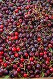 κεράσια σκούρο κόκκινο Στοκ εικόνες με δικαίωμα ελεύθερης χρήσης