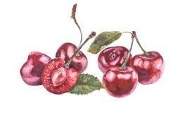 Κεράσια Watercolor στο άσπρο υπόβαθρο Στοκ Εικόνα