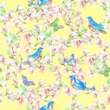 Κεράσι, μήλο, λουλούδια, πουλί Άνευ ραφής σχέδιο Watercolor Στοκ Εικόνα