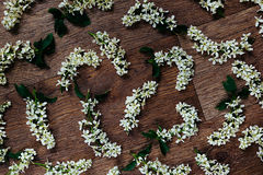 Κεράσι πουλιών λουλουδιών στο ξύλινο υπόβαθρο λεπτομερές ανασκόπηση floral διάνυσμα σχεδίων Ξύλινη ανασκόπηση Στοκ Φωτογραφία